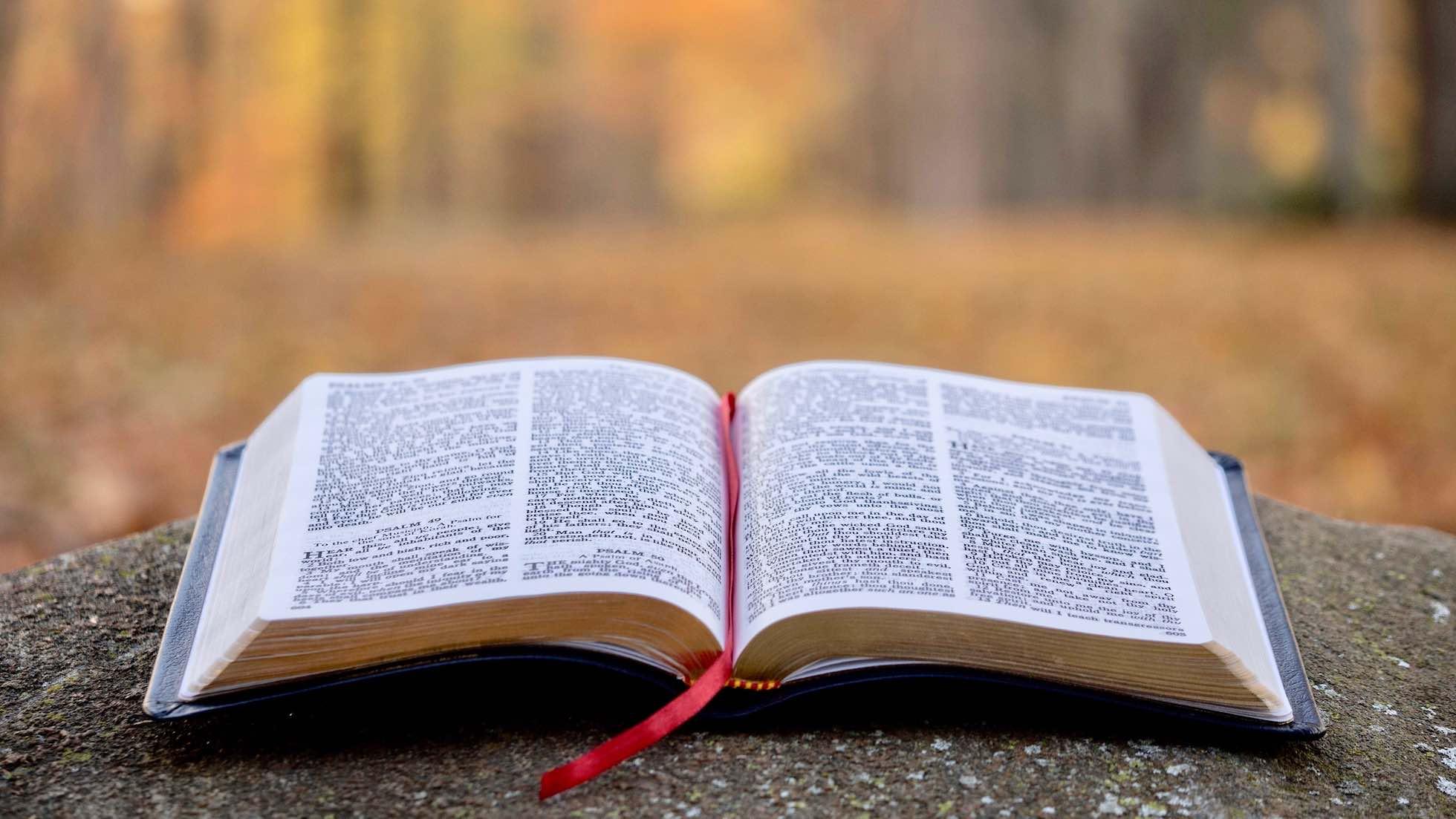 eine aufgeschlagene Bibel liegt auf einem herbstlichen Waldweg